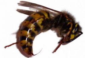 Ką reikia žinoti apie vabzdžių įkandimus?