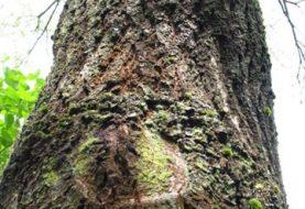Pajuskime medžių stiprybės galią sveikatai