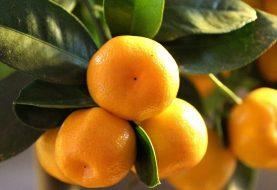 7 paslaptys, kaip išsirinkti skaniausius mandarinus