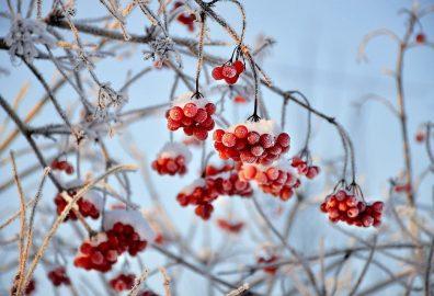 Žolininkas Marius Lasinskas: kokie augalai ypač naudingi šaltuoju sezonu