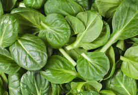 Daržovių karaliais vadinami špinatai: vitaminų gausa ir špinatais įdarytų makaronų receptas