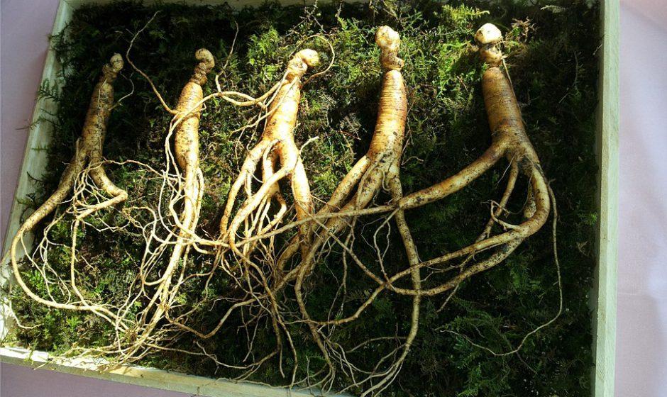 3 augalai sveikatai, energijai ir gerai savijautai